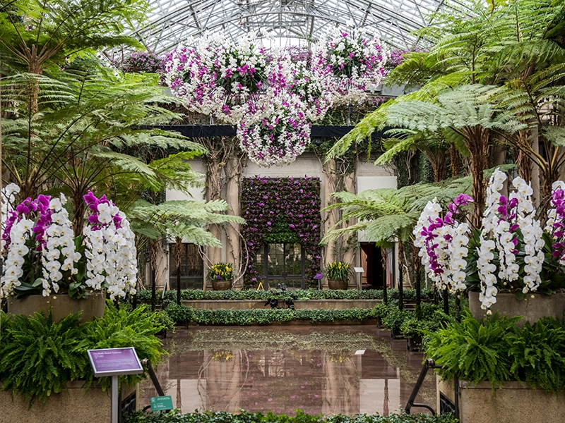 Longwood Gardens Orchid Extravaganza On View Now Thru March 27 Longwood Gardens Grand