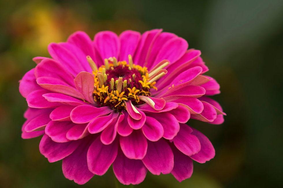 Heat Tolerant Plants Garden Plants That Will Survive The