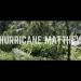 matthew-foliage-update