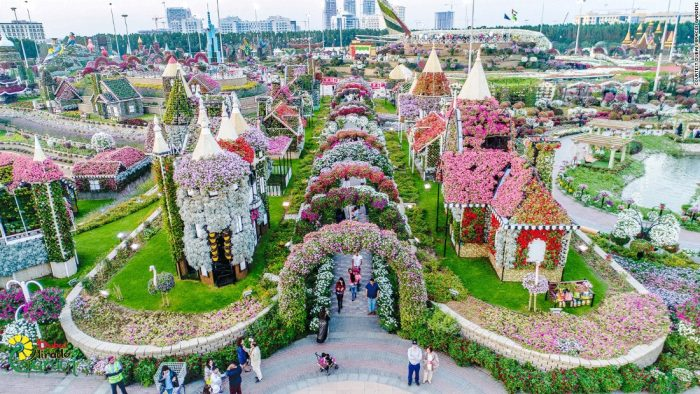 Natural Flower Garden : Dubai miracle garden world s largest natural flower