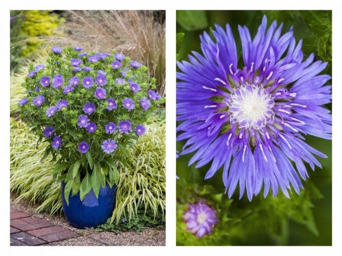 Photo gallery 11 best new perennial flowers of 2018 grand the best new perennial flowers of 2018 mightylinksfo