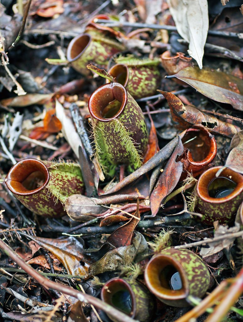 The Weird World Inside a Pitcher Plant - Grand Central Floral